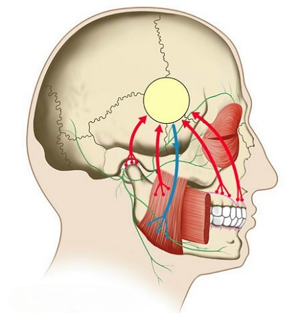 manual therapy techniques for headaches
